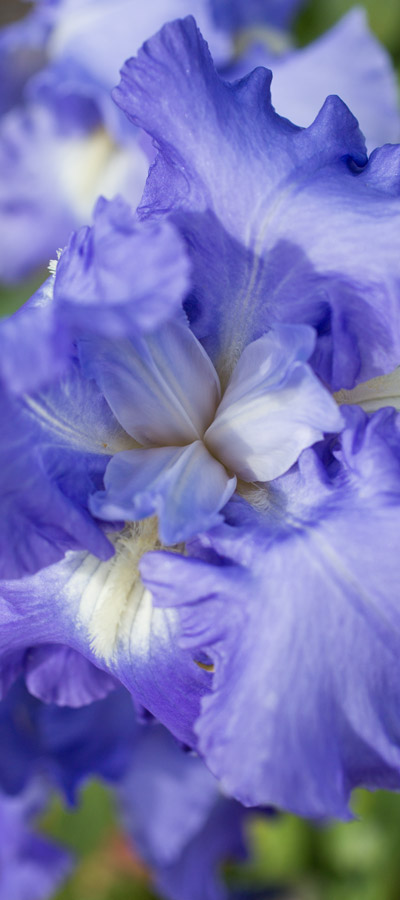 fleurs16_19